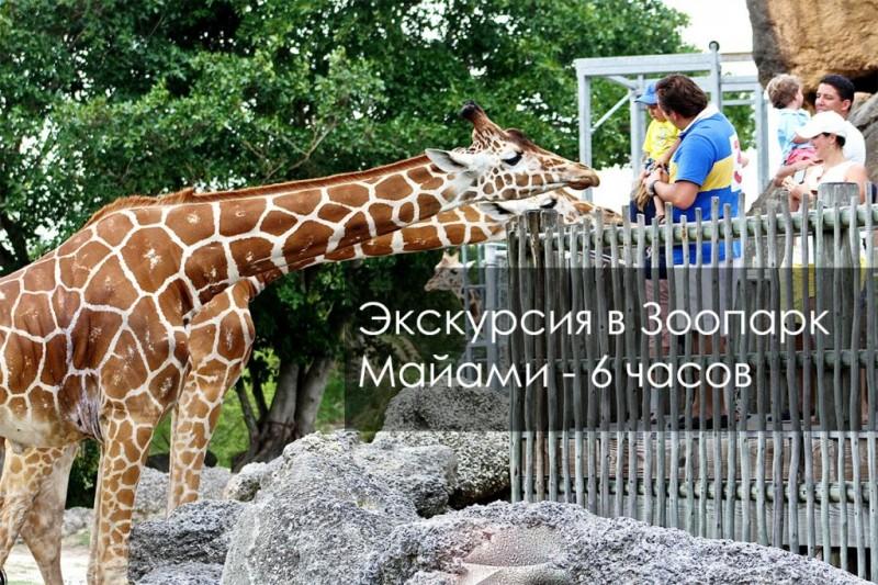 Экскурсия в Зоопарк Майами